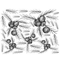 Hand drawn wallpaper of juniper berries on white b vector