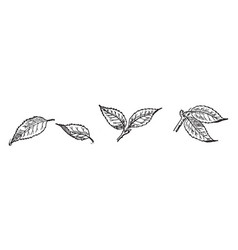 Six leaves vintage vector