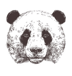 sketch giant panda animal sketch vector image