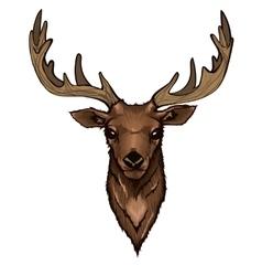 Wild Deer Head Portrait vector