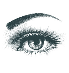 beautiful female eye hand drawn vector image