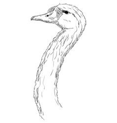 A swan head vector