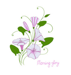 Decorative wedding element convolvulus bouquet vector