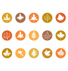 maple leaves button icons vector image