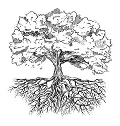 spreading tree with leaves and rootage hand drawn vector image