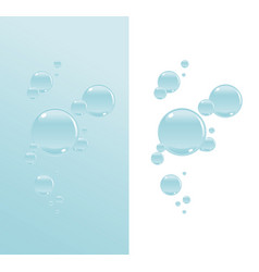 transparent water bubbles vector image
