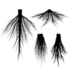 silhouette tree roots set vector image vector image