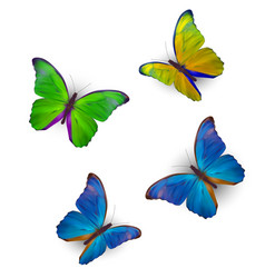 butterfly set isolated on white realistic vector image
