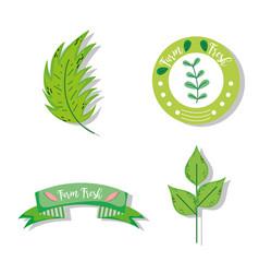 set of farm fresh label vector image