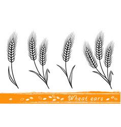 Set of wheat ears vector