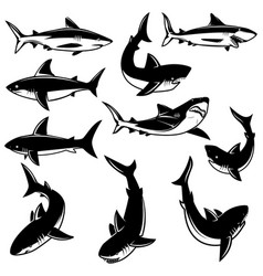 set shark design element for logo label print vector image