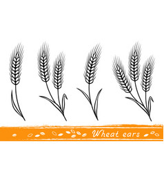 Set wheat ears vector