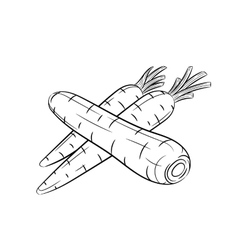 Hand drawn carrot sketches on white background vector image vector image