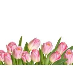 beautiful realistic tulip bouquet eps 10 vector image