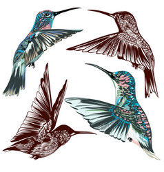 Collection hand drawn hummingbirds vector