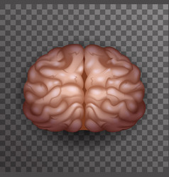 human brain realistic 3d poster transparent vector image