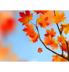 Maple tree leaves vector