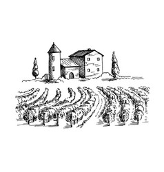 rows of vineyard grape plants and house vector image