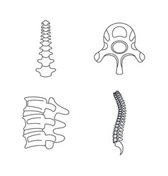 Spine orthopedic vertebra icons set outline style vector