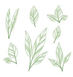 leaves shape vector image vector image