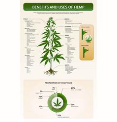 Benefits and uses hemp vertical texttbook vector