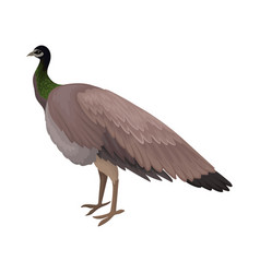 Detailed flat icon of female peacock vector