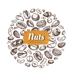 eating nut label hand drawn nuts and seeds vector image