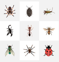Realistic housefly dor emmet and other vector
