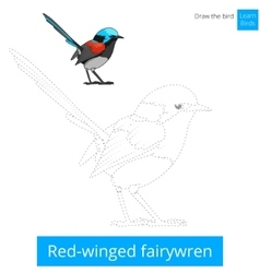 Red winged fairywren bird learn to draw vector