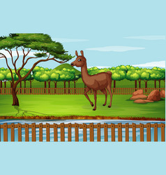scene with alpaca at zoo vector image