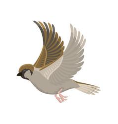 sparrow flying bird vector image vector image
