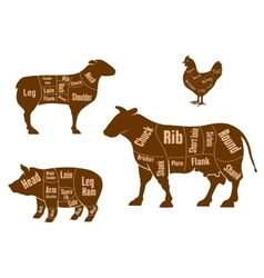 Chicken pork beef and lamb meat cuts scheme vector