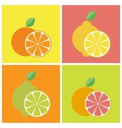 Citrus fruits icons vector