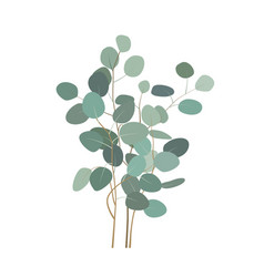 eucalyptus branches or bouquet hand painted vector image