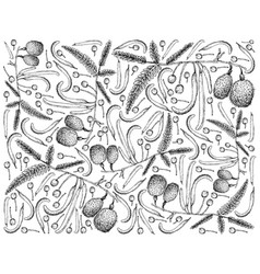 Hand drawn background of african locust bean fruit vector