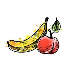 ink drawing banana and peach vector image
