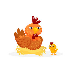 poultry bird chicken family on white background vector image