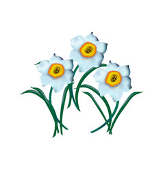 spring flower narcissus isolated on white vector image