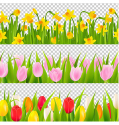 Tulip and narcissus border with transparent vector