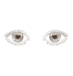 woman eyes hand drawn sketch vector image