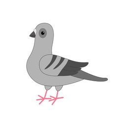 Dove bird Gray Pigeon Cute cartoon character on vector image