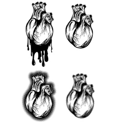 human heart set vector image