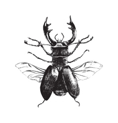 Hand drawn deer beetle vector image