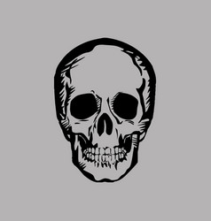 human skull on gray background vector image