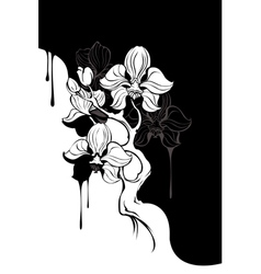 monochrome orchid vector image