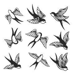 set swallow on white background design element vector image