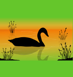 Swan on the lake scenery vector