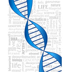 DNA strand vector image