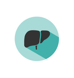 liver icon with shade on green circle vector image