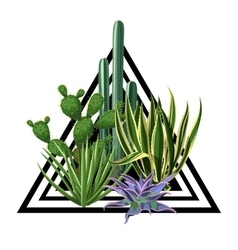 Print with cactuses and succulents set Plants of vector